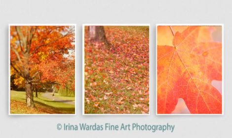 3 piece wall art, orange coral red Autumn nature photography set of 3 vertical pictures tryptich leaf wall art modern, Autumn print set