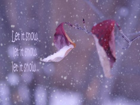 Winter art photography print, let it snow quote photo, red leaf art leaves picture, burgundy purple wall decor, winter nature wall art print