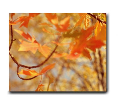 Autumn canvas picture, burnt orange wall art, Autumn artwork gold orange fall leaf decor, modern nature  gallery wrapped canvas photography