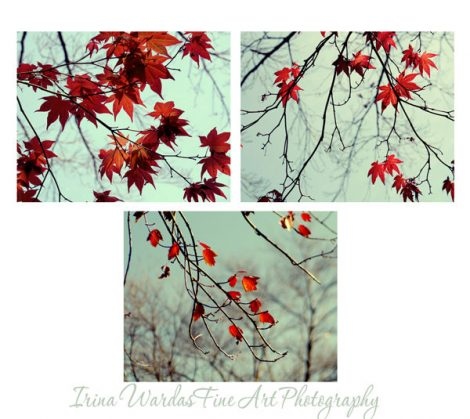 Mint and red gallery wall Maple tree branch art photography set, 3 11x14 photo prints, maroon red leaves pictures, living room nature decor