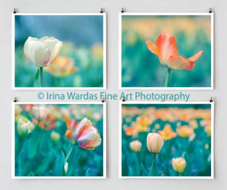Tulip photography set, 4 botanical floral prints, turquoise teal wall art, cream orange flower photos, living room decor, green blue nature