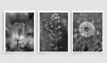 Black and white art nature photography prints, dark grey wall art set, grey bathroom decor modern print set 3 botanical pictures, vertical