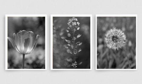 Black and white art nature photography prints, dark grey wall art set, grey bathroom decor modern print set 3 botanical pictures, vertical