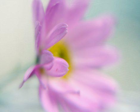 Pink flower art photo, flower photography, aqua mint pink girls room decor, flower artwork, floral picture, flower photo nursery wall art