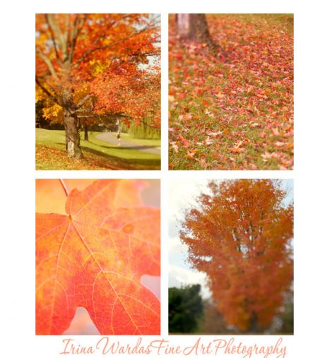 Orange nature photography set, 4 11x14 botanical pictures, Autumn tree leaf wall art, green red fall nature decor, vertical art wall prints