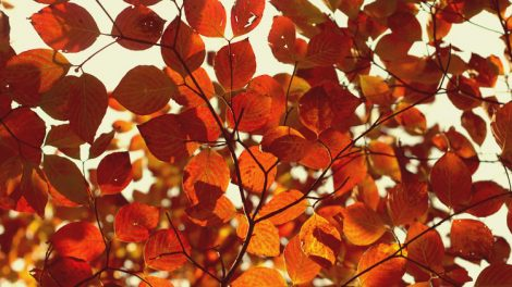 healing colors of Fall