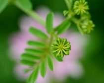 Photography nature artwork, pink green wall art, floral macro photography, modern wall art, fine art print, botanical art, living room decor