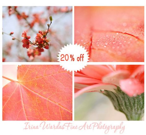 Coral photography set, nature wall pictures, coral wall art, 11x14 botanical prints, modern art print set, chic wall art girls bedroom decor