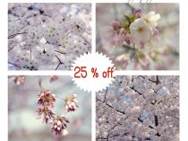 Cherry Blossom photography, spring nature print set, Sakura cherry blossom dc, lavender aqua pink nursery wall art set, tree branch pictures