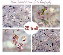 Cherry Blossom photography, spring nature print set, Sakura cherry blossom dc, lavender aqua pink nursery wall art set, tree branch pictures