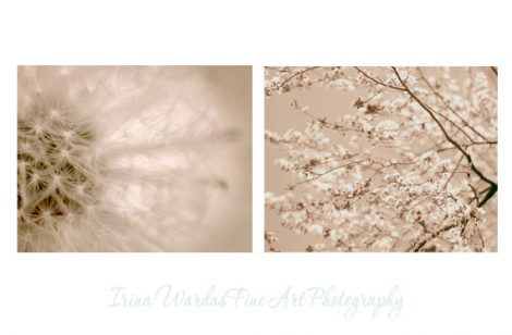 Beige pastel art prints botanical photo set, 2 11x14, 8x10 dandelion tree branch nature wall art, pale brown tan neutral bedroom decor cream