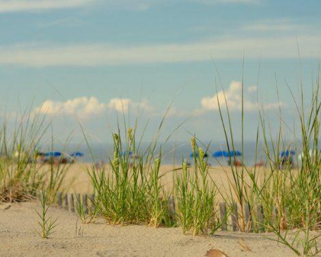 Large beach photo, seashore photography, sand dunes green sea grass, nautical cottage art coastal print, shore picture, aqua blue decor