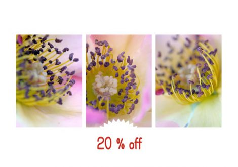 Flower stamen fine art macro photography, vertical print set of 3 wall art floral pictures, yellow purple pink botanical abstract wall decor