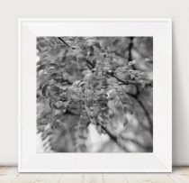 Grey picture, tree branch art, grey and white home wall decor, nature art print, bathroom decor photography print 12x12, 11x14 grey wall art