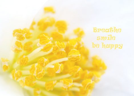 Yellow and white flower photo print, flower stamens, floral wall art, botanical photo, macro photography, yellow picture, quote art print