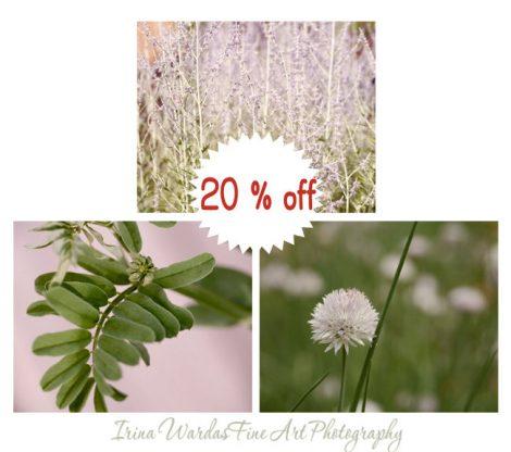 Nature photography prints, 3 botanical prints set,  green pink lavender home decor, wall art set, 11x14, 12x12 photo prints, wall pictures