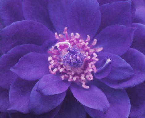 Purple photography flower abstract wall art, violet dark lavender floral artwork, floral mandala art relaxing, modern print, boho wall decor