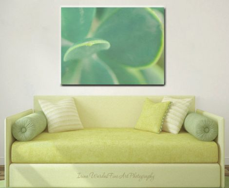 Succulent art, large modern canvas, succulent canvas print, aqua green wall art, modern decor, garden plant, nature abstract, minimal canvas