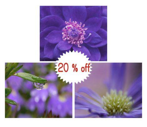 Purple wall art set, floral photography set of 3 8x10 photo prints, lilac violet nature print art, purple flowers wall art, purple pictures