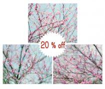 Spring blossom tree branches photography, aqua turquoise pink wall art set 3 11x14, 12x12 nursery prints girl room decor, nature art prints