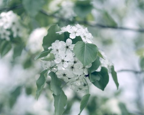 Green and white wall art print, powder room art, nature photography, tree blossom picture, spring photograph, guest room wall art, botanical