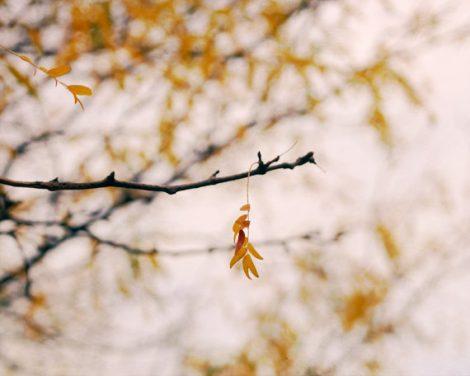Nature photography minimalist art, white yellow gold artwork yellow leaf tree branch minimal print 16x20, ochre botanical wall decor bedroom