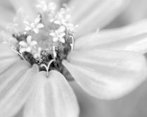 Black and white flower photography, grey flower print, grey and white wall picture floral macro art, girls room print bathroom bedroom decor