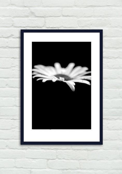 Black and white modern art, white flower photography, minimal print, white daisy picture, flower on black background, large vertical artwork