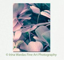 Modern floral art, hydrangea flower photography large wall art, dusty rose pink bedroom canvas wrap nature botanical artwork, turquoise teal