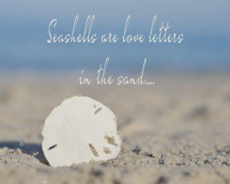 Seashells are love letters quote photo print, nautical photography, sand dollar sea urchin seashore coastal decor, beach saying, blue white