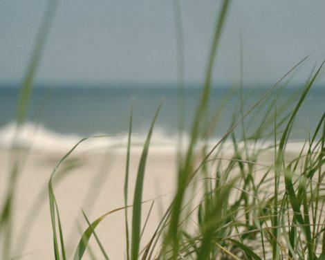 Beach grass photography, ocean coastal decor, green grass print, seashore art nautical teal light beige coastal decor, beach nature wall art