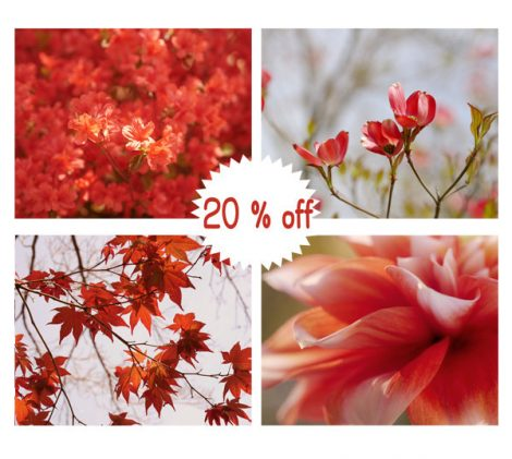 Red art, red photography prints, red pictures set of 4 photo prints 11x14, 8x10, red wall decor, nature print set, botanical wall art set