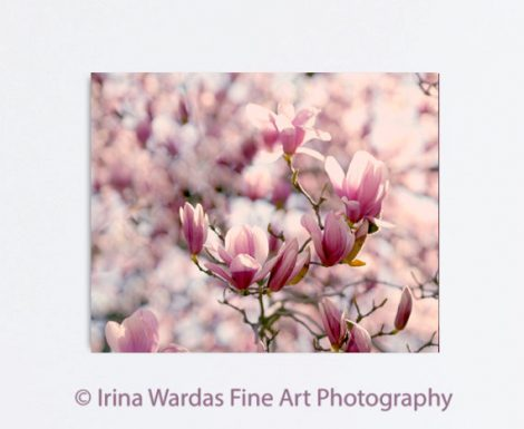 Magnolia wall art, large floral canvas print, flower photography, red burgundy peach wall decor oversized artwork, nature gallery wrap