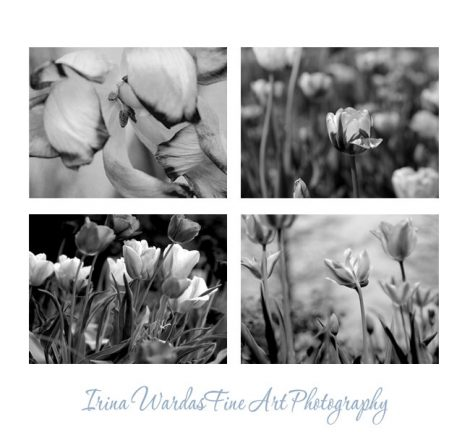 Black and white photography, flower wall art tulip photography set 4 floral prints, dark grey nature pictures, modern wall art, botanical