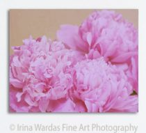 Peony canvas, large wall art gallery wrap canvas floral print 16x20, bedroom wall art decor, pink peonies botanical art, pale pink, beige