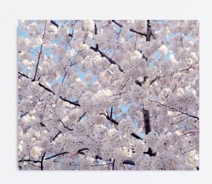 Canvas art Cherry Blossom photograph, spring tree photography, Japanese Sakura branch, pale pink white large canvas art, bedroom wall decor