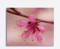 Floral blossom art, flower macro canvas modern art photography, canvas print, large wall decorart, flower stamen, beige hot pink canvas wrap
