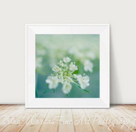 Modern botanical print, Queen Anns Lace flower photography floral print picture 10x10, white flower artwork, green teal turquoise wall art