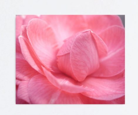 Modern floral canvas art, pink flower canvas Camellia art, large art canvas print, bedroom wall art, girls room wall decor, gallery wrapped