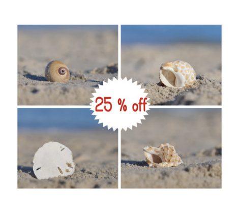 Seashell art, seashell on the beach pictures, seashell print set, shell photography, blue tan seashore coastal wall art set, seashell decor