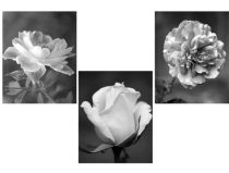 Black and white wall art, set of 3 photo prints, rose artwork floral photography, dark grey wall decor, vertical flower pictures 11x14, 5x7