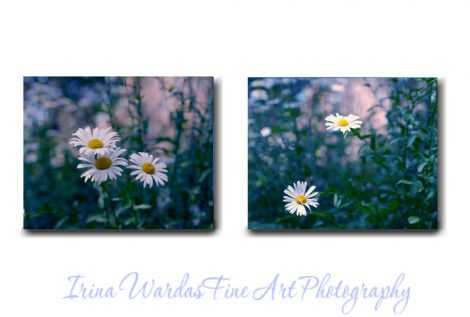 Canvas wall art, daisy photography canvas, dark blue green teal nature wall art, floral canvas art set 2 flower canvas prints, lavender pink