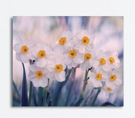Floral canvas art, narcissus art large wall art, yellow white flowers canvas wall art, indigo teal decor, nature botanical canvas wrap print