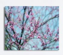 Large wall art canvas, pink blossom Spring nature photography, tree branches, aqua blue wall art, bedroom wall decor, artwork for girls room