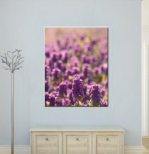 Purple wall art floral canvas photography, nature canvas art radiant orchid wildflower field canvas print, girls room decor, sunshine bokeh