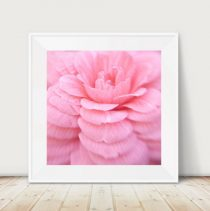 Pink photography, pink flower artwork, floral abstract photography, modern wall art, pink Camellia, girls room wall decor, bedroom wall art