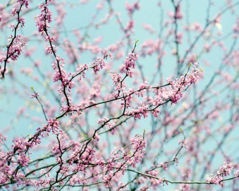 Spring tree branch art print, fine art photography, pale turquoise art, pastel pink blossom photo print 11x14, 8x10, baby girl nursery decor