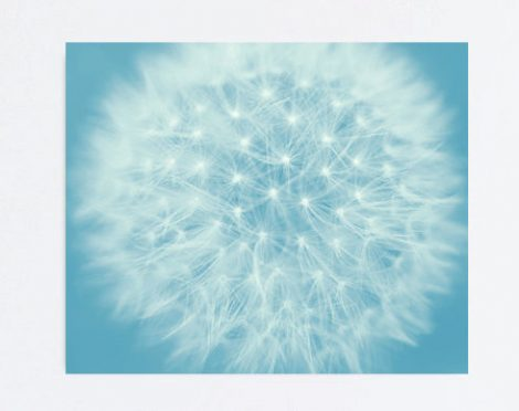 Dandelion canvas wall art, blue wall art, dandelion photography large gallery wrap, floral abstract, modern wall decor, baby boy nursery art