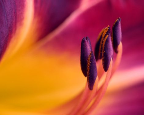 Colorful wall art  flower artwork floral print, yellow burgundy modern decor abstract art, macro photography, flower stamens, orange purple