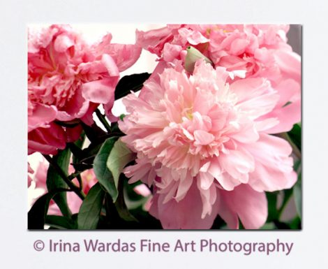 Peony photography, floral canvas print, peony canvas art, large floral artwork, peonies boho wall art, salmon pink decor, pale pink green